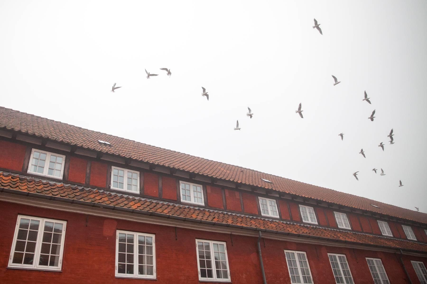 Kopenhaga_144